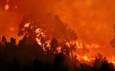 Informação LESADOS pelos incêndios de 2018